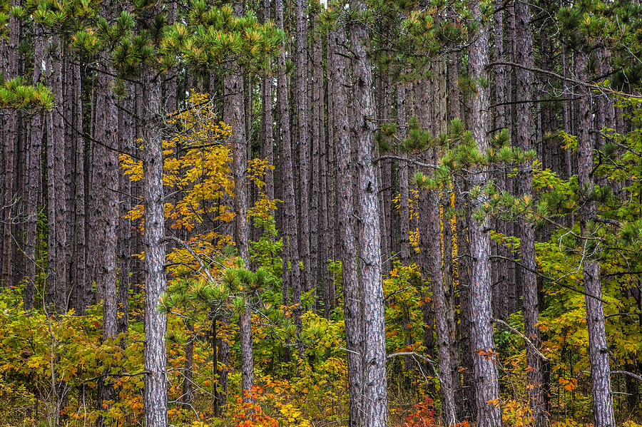 pinegrove-2
